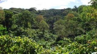 La forêt verte d'altitude