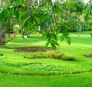 Le Savanna Botanic Garden