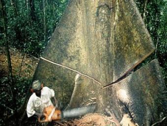 L'exploitation forestière