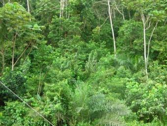 La végétation du Cameroun