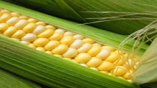 L'agriculture vivrière