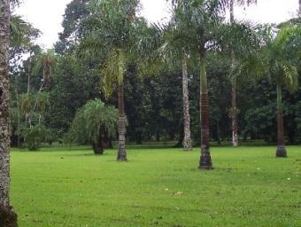 Le jardin botanique de Limbé