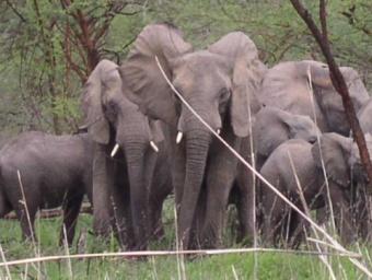 Les parcs naturels du Cameroun